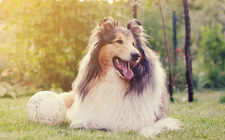 Гороскоп для собак на 2020 год