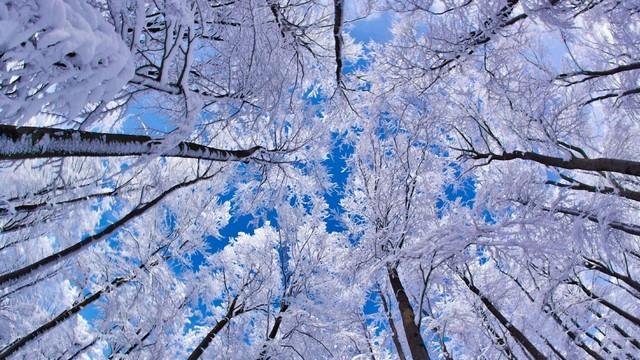 МетеоПрогноз зимы 2019-2020 в Самаре
